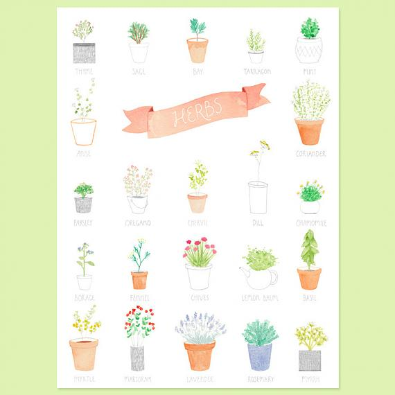 Herbs A4 Print by Amy Borrell