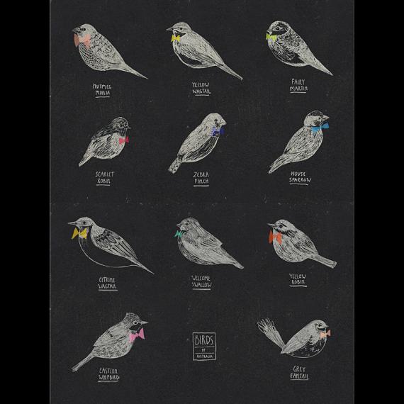Birds of Australia A4 Print by Amy Borrell