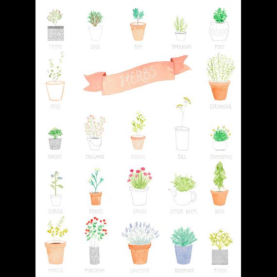 Herbs A4 Print by Amy Borrell