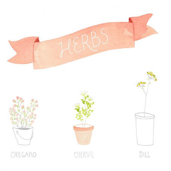 Detail from Herbs A4 Print by Amy Borrell