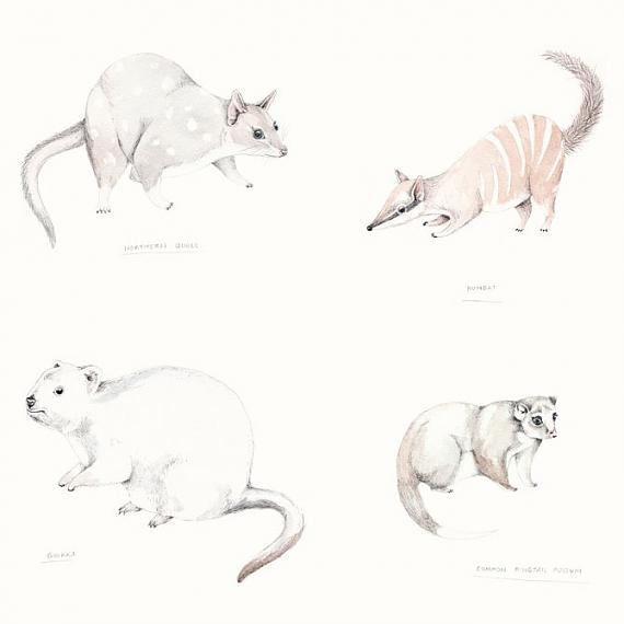 Detail from Marsupials A3 Print by Amy Borrell